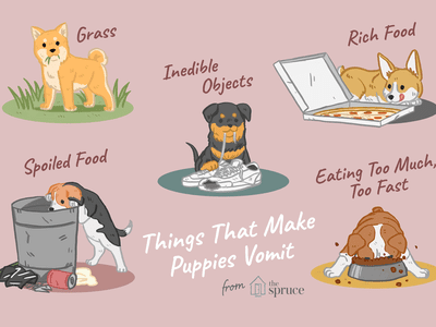 How and When to Induce Vomiting in a Puppy