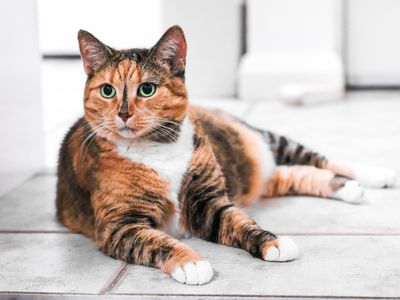 All About Red Tabby Cats