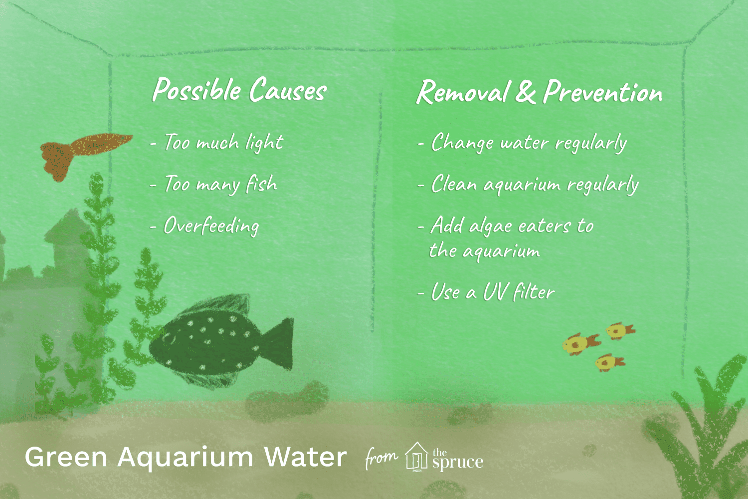 Causes And Cures For Green Aquarium Water