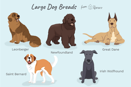Popular Giant Dog Breeds That Make Good Pets