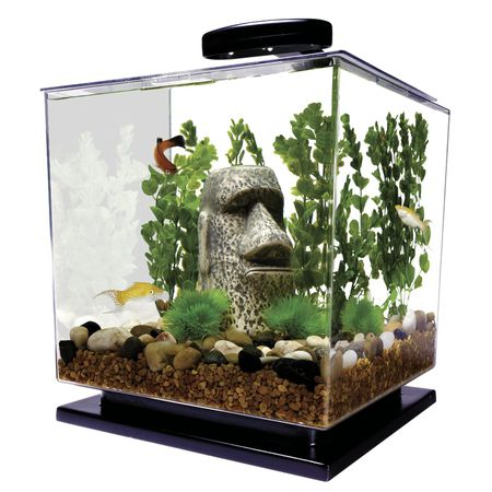 Mini Aquariums The Pros And Cons Of Small Fish Tanks