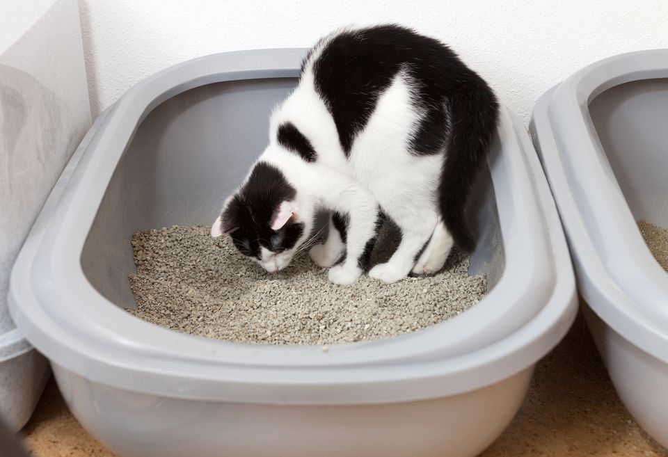 gato comiendo arena