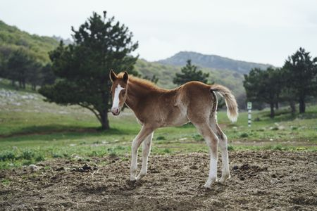 training and handling a colt or filly foal