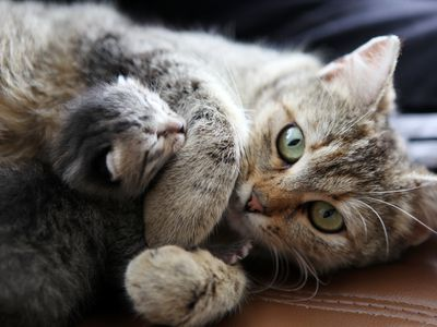 How To Help A Pregnant Cat Give Birth