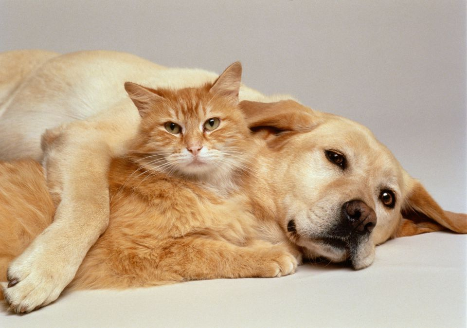 A dog and a cat laying on each other