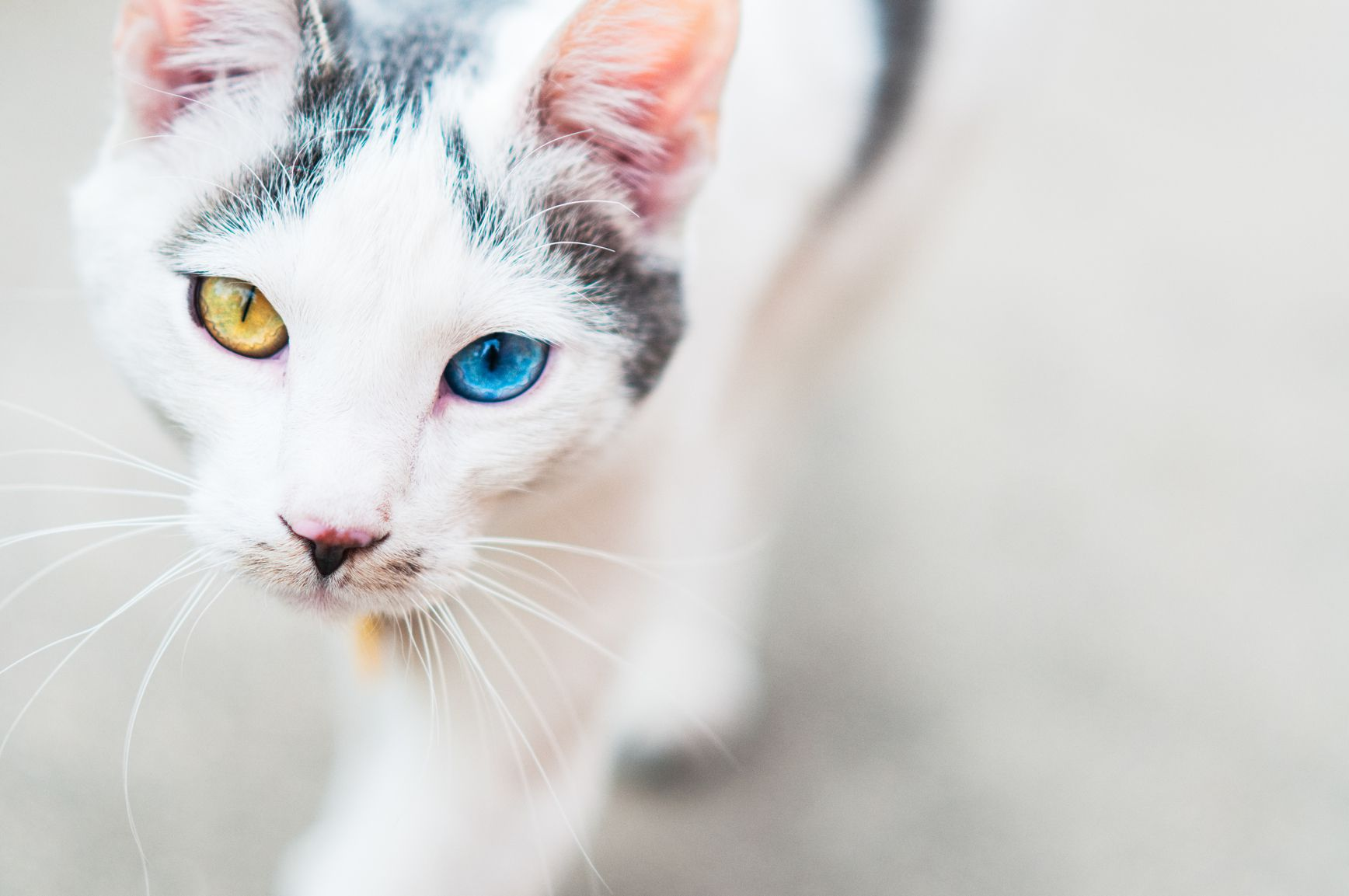 Mixed And Domestic Cat Breed Profile