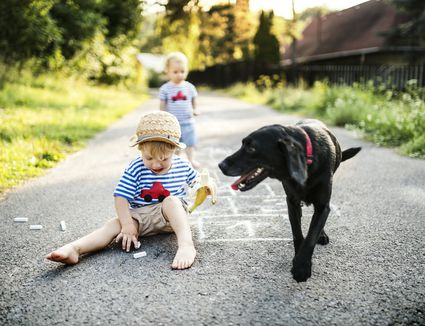Toddler boy playing with chalks on the street while holding a banana with black dog looking on