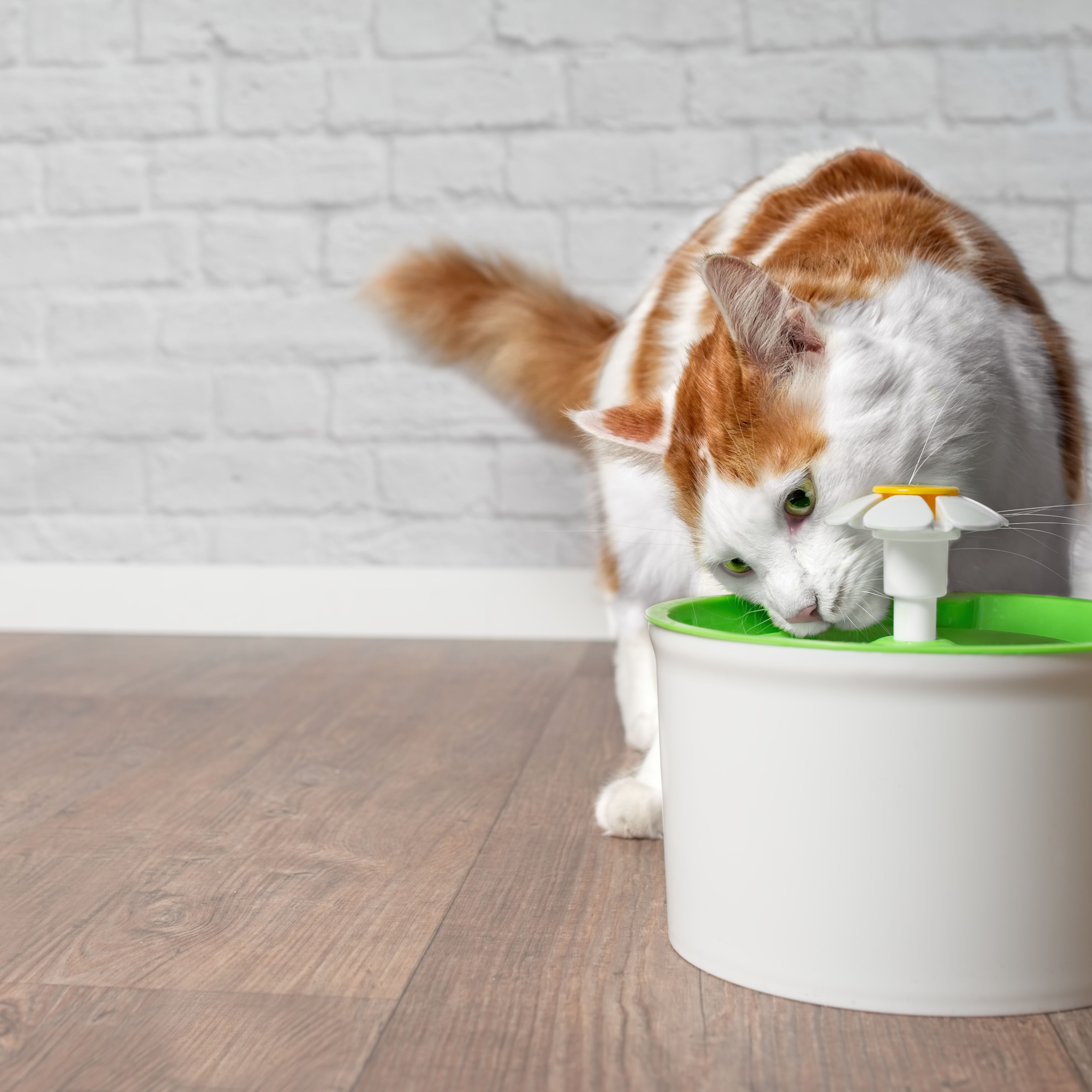 Cat Supplies Pet Friend Cat Fountain 2 Litre Clean Purified Fresh Water Drinking Bowl For And Dishes, Feeders & Fountains