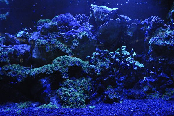 aquarium with LED lighting
