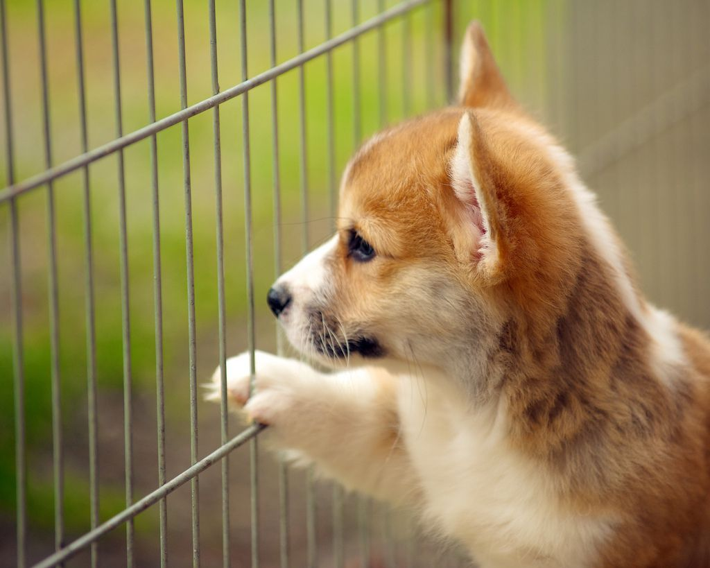 Small puppy with paw on fence