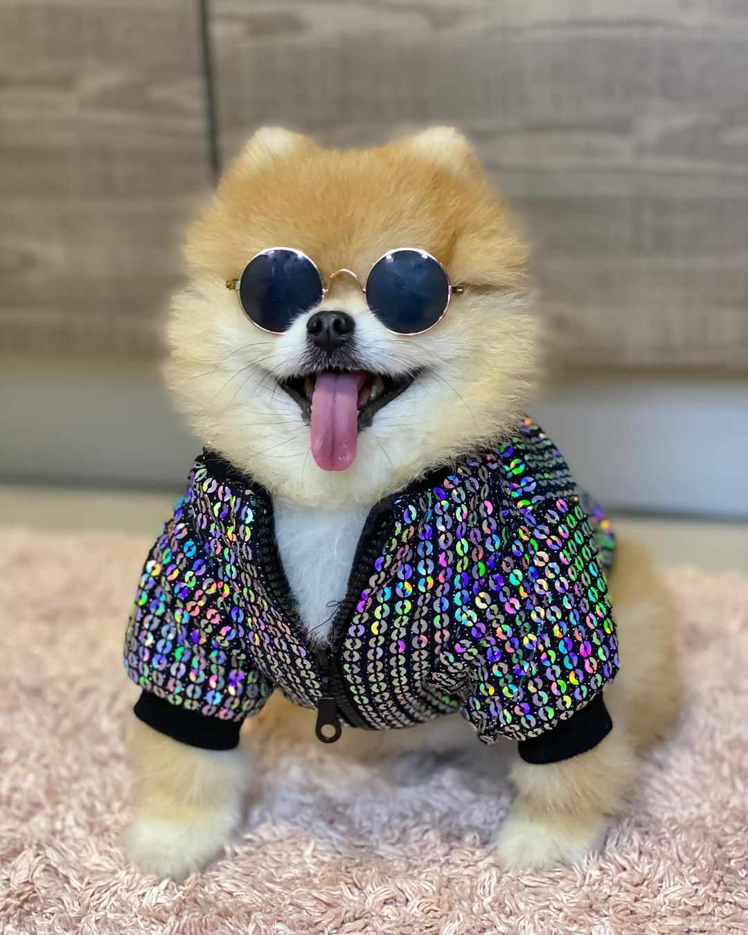 A pomeranian wearing round sunglasses and a colorful zip-up jacket.