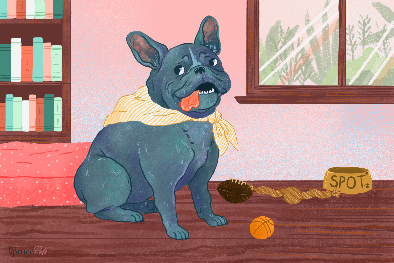 dog sitting on hardwood floors illustration