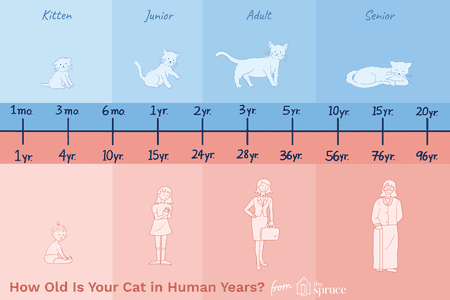 Cat Age To Human Years Chart