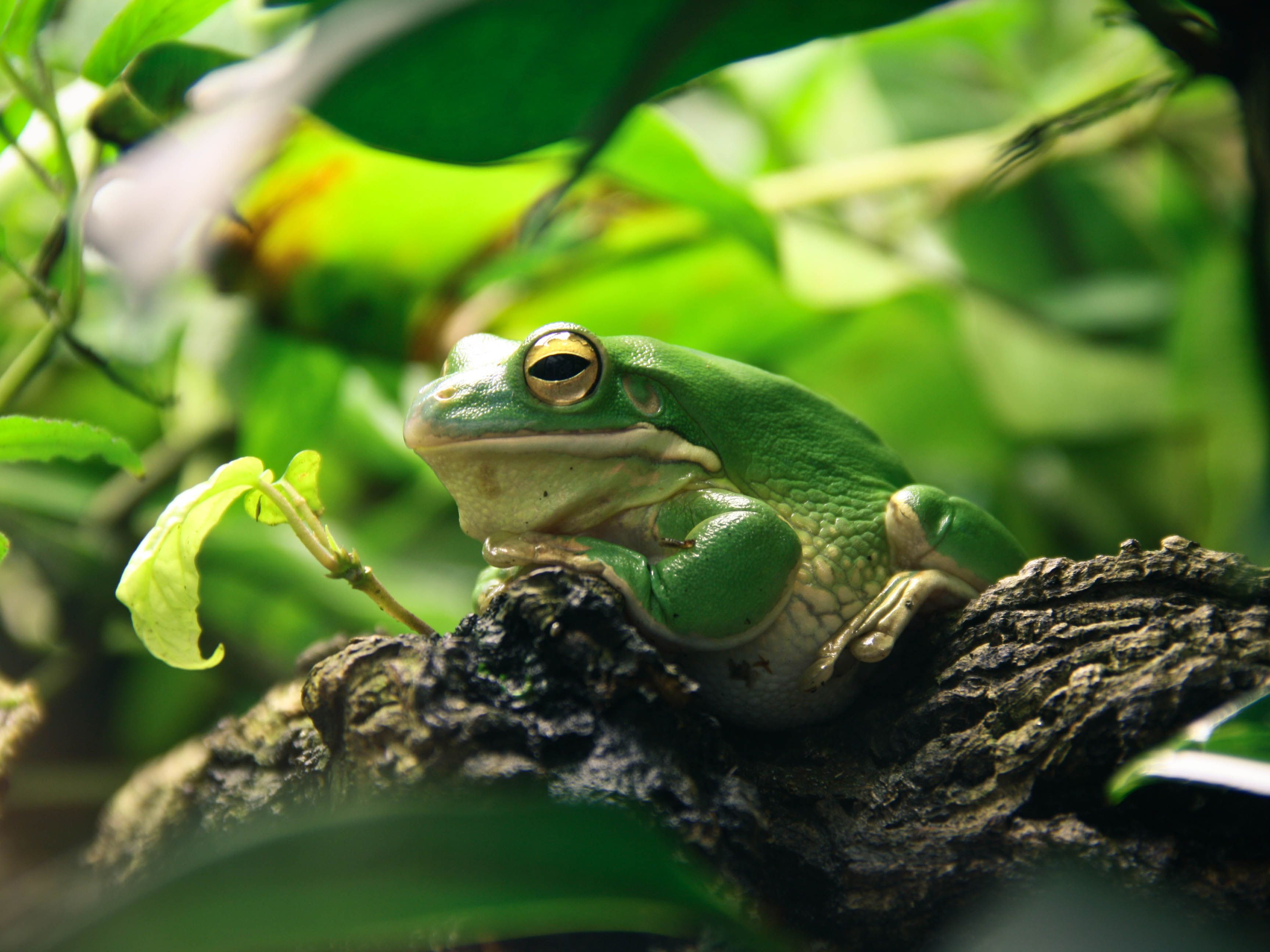 What You Need To Know About Pet Frogs