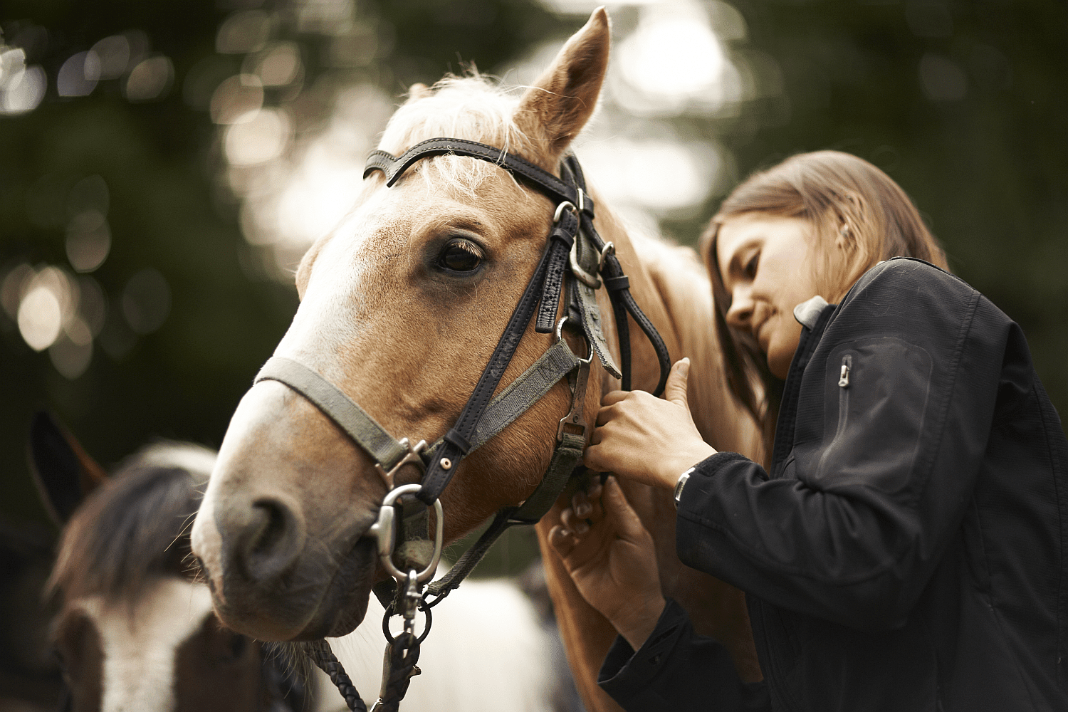 Girl doing up bridle buckle on palomino horse.