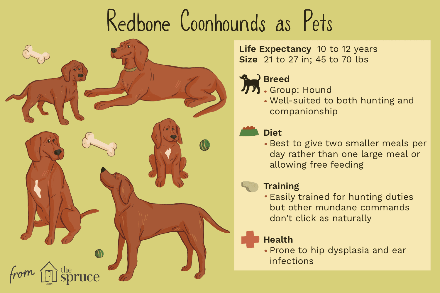 redbone coonhounds as pets illustration