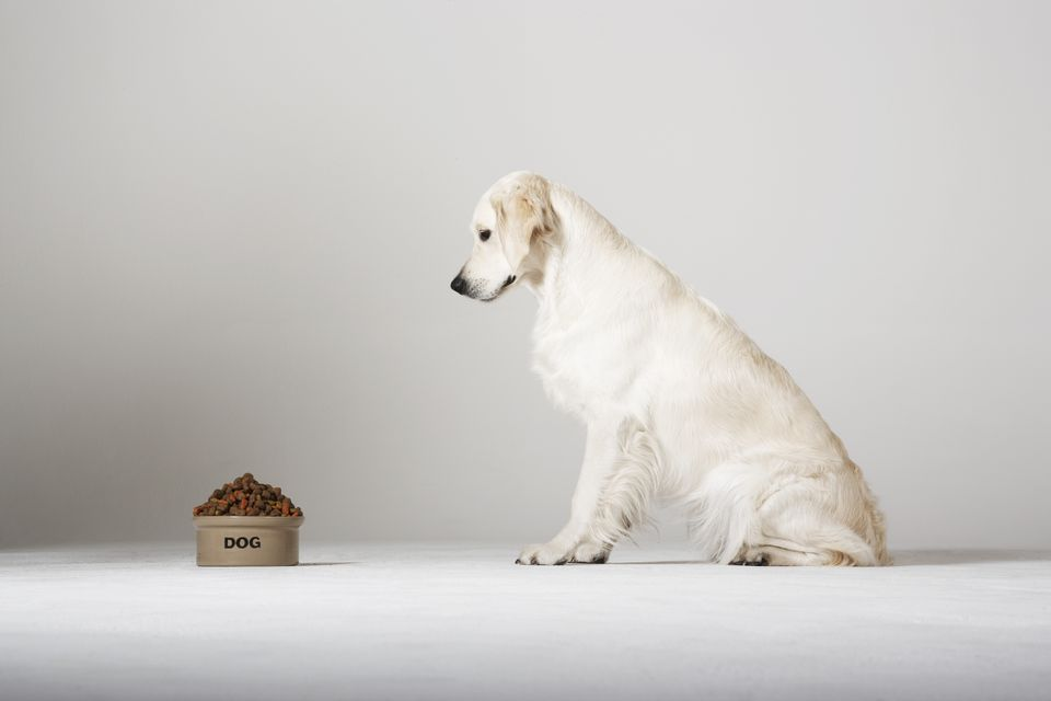 Perro mirando el tazón de comida