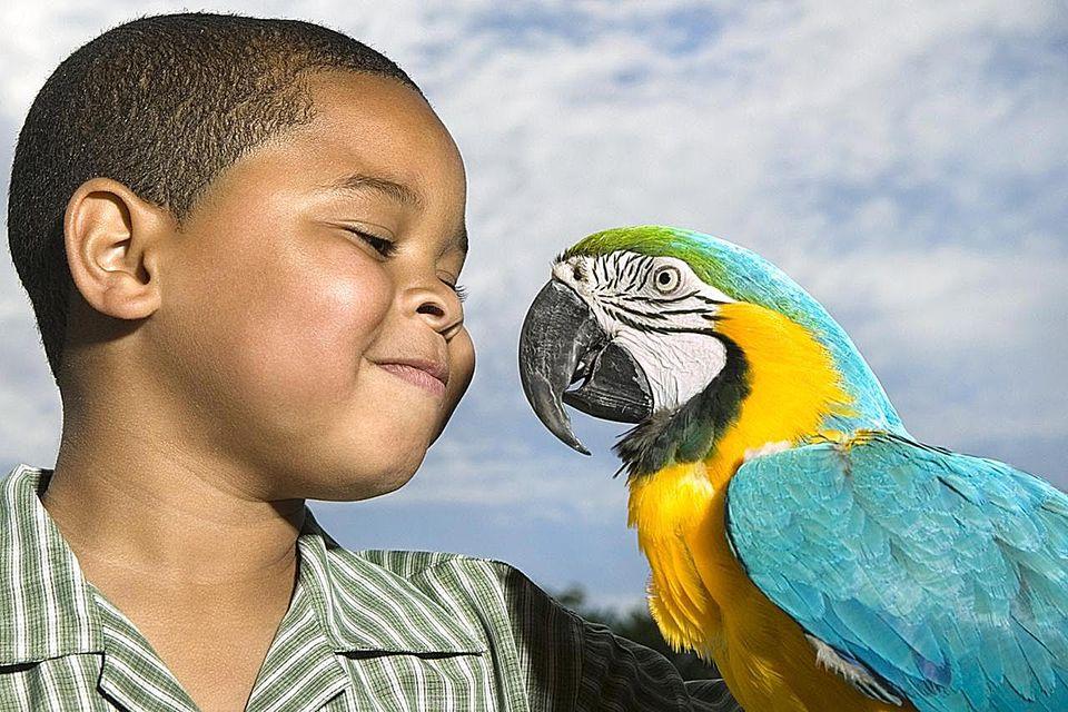 Boy (6-8) looking at yellow and blue Macaw (Ara ararauna) smiling