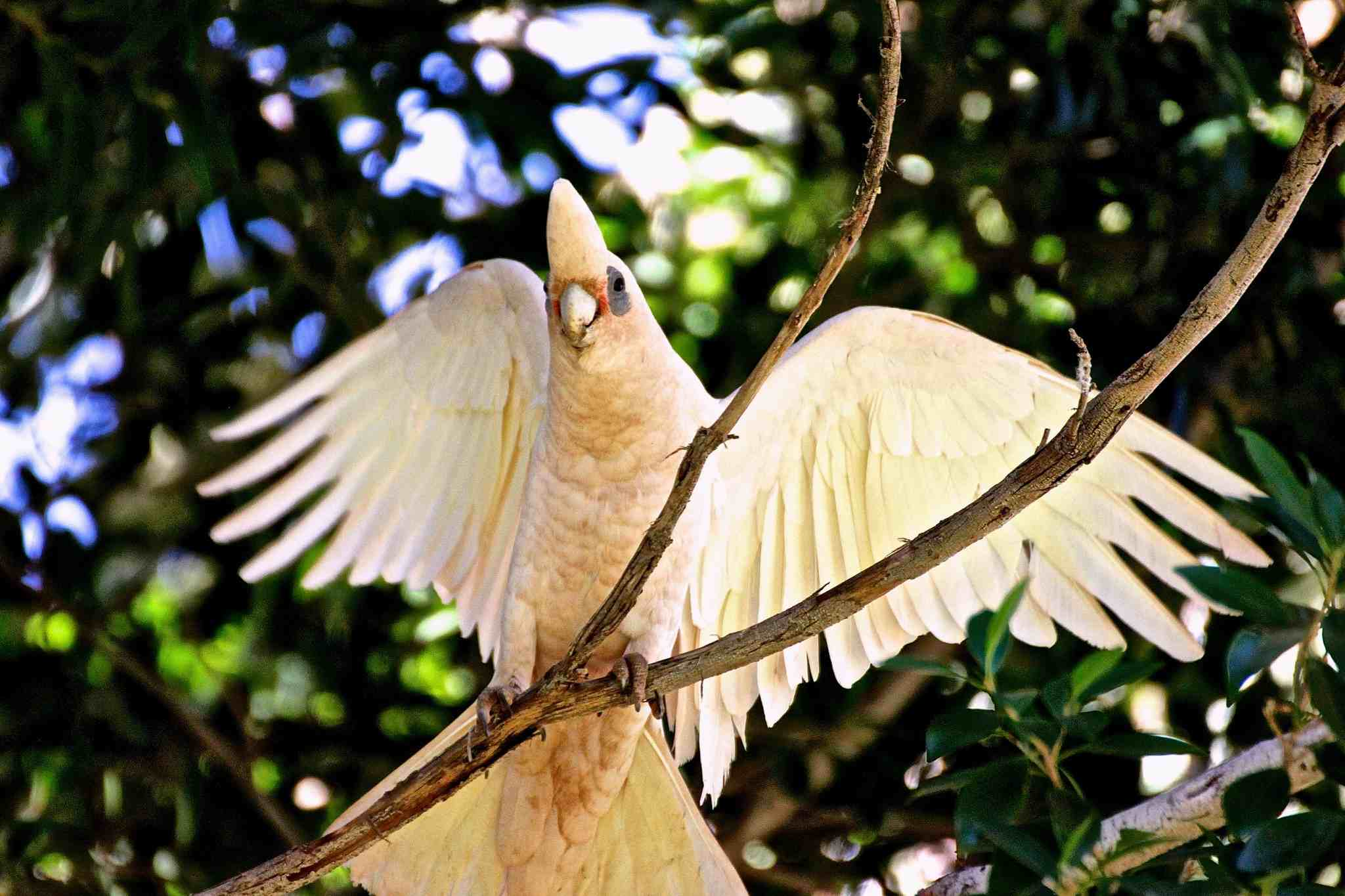 Low Angle View Of Long-Billed Corella Perching On Branch