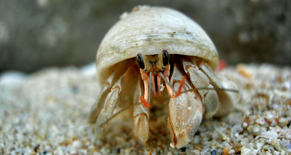 Close-Up Of Hermit Crab In Sea