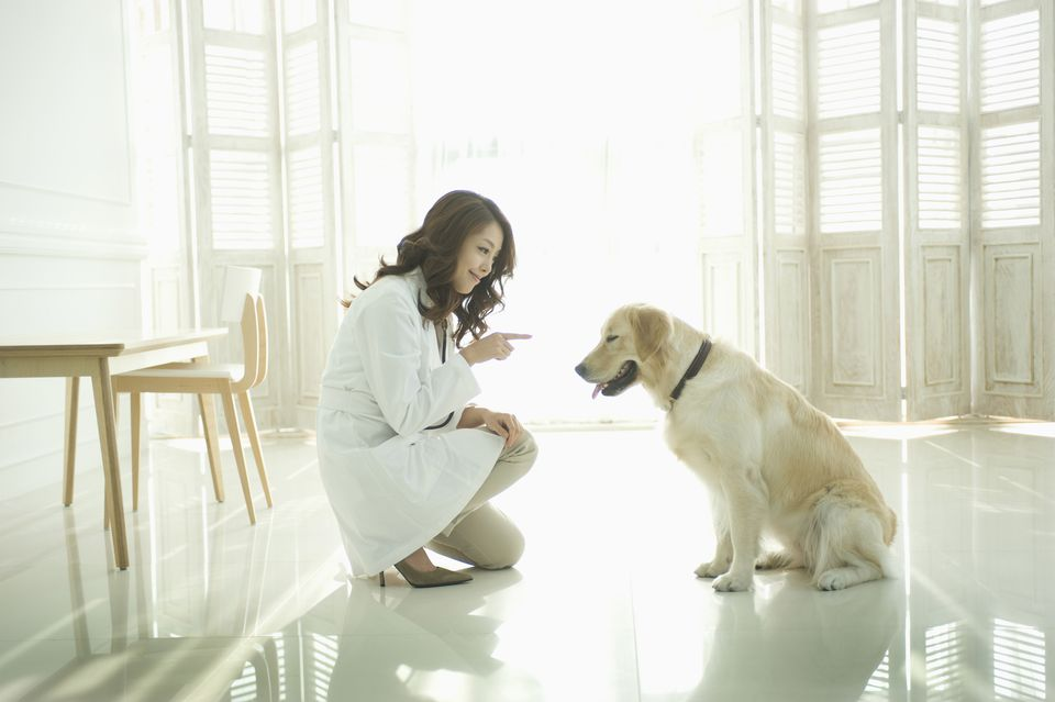 Young woman playing with dog,Korean