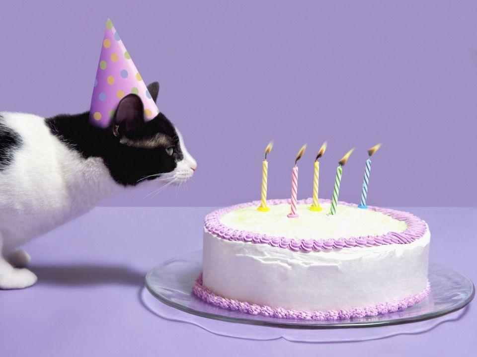 A cat celebrating a birthday
