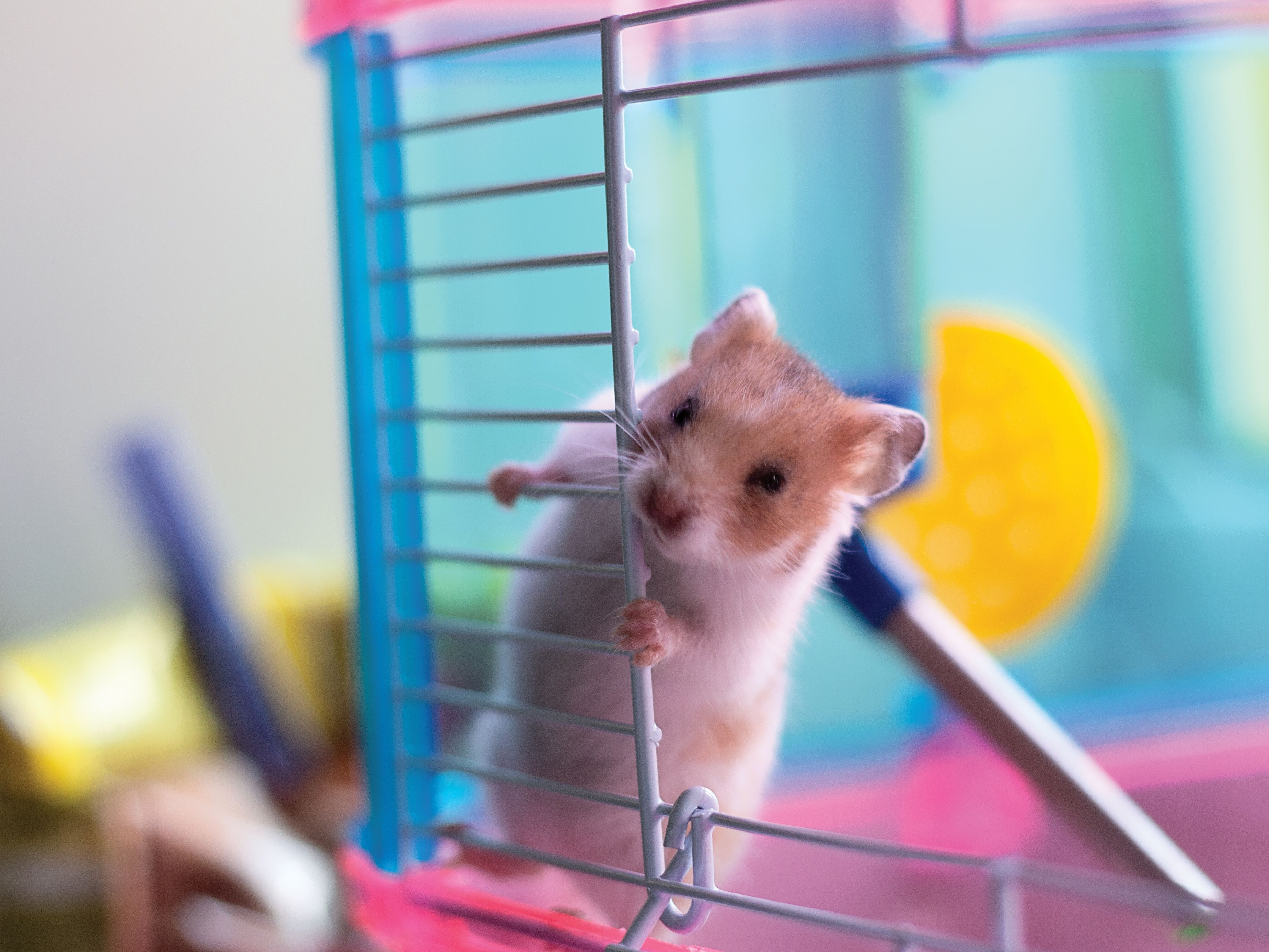 Do Mice Make Good Pets for Children?