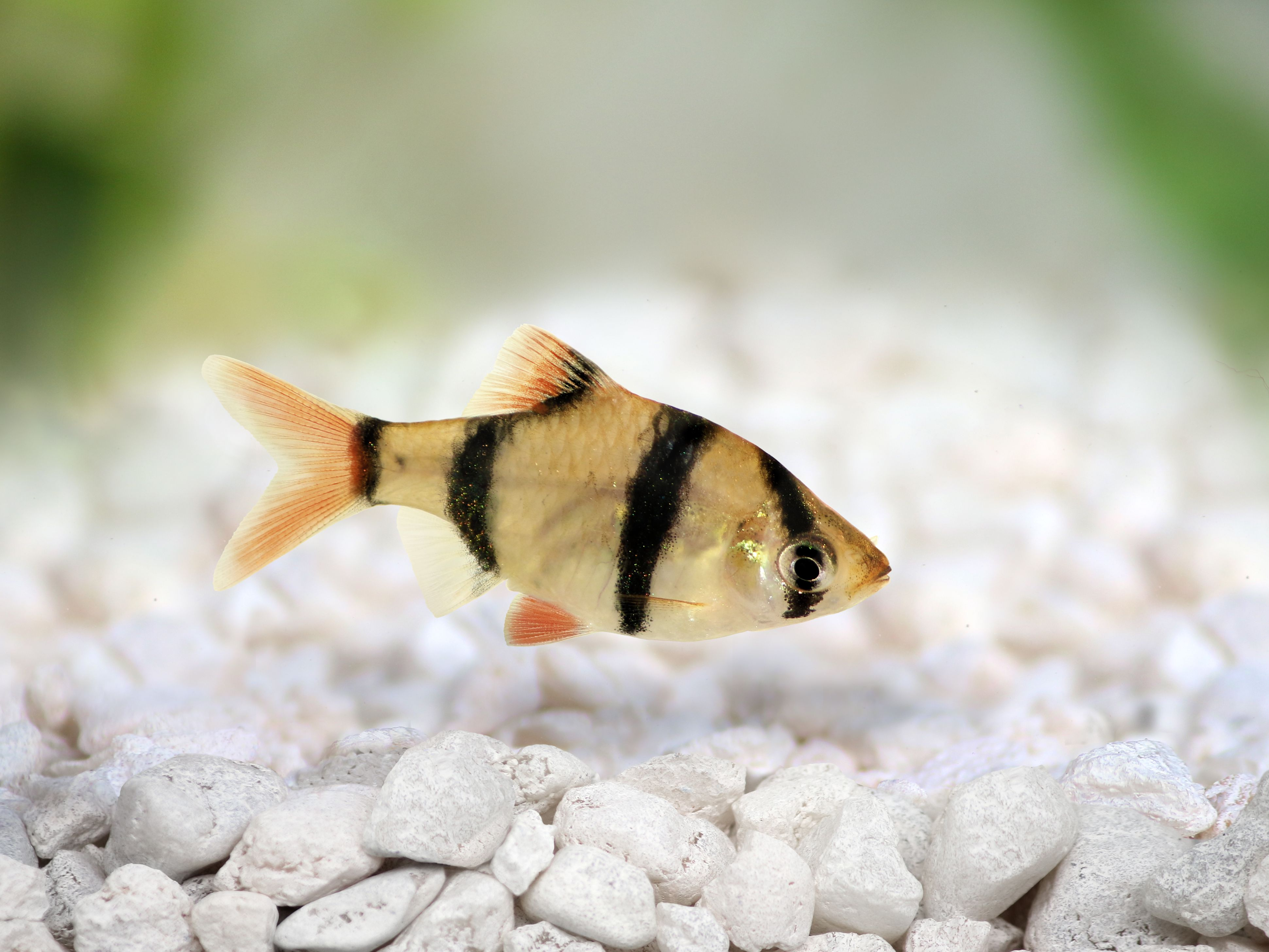 Common Fish Names Beginning With The