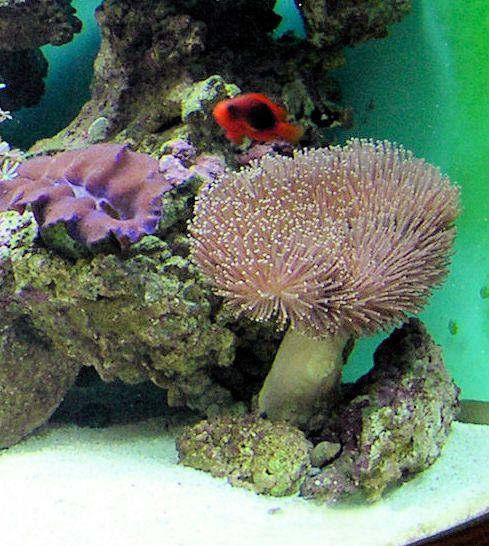 Coral de cuero antes de arrojar