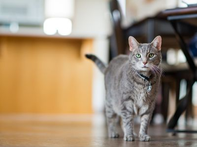 does your cat need to see the vet 5 things to monitor for proper health