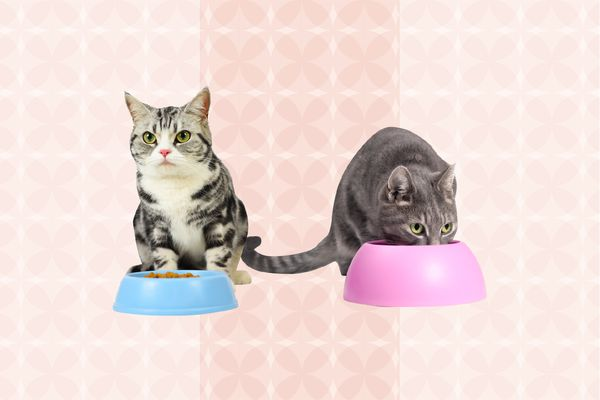 Best Cat Foods for Weight Loss