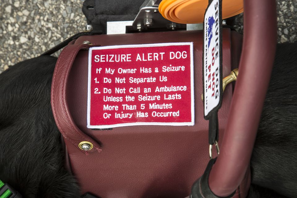 ¿Qué es un perro convulsivo?