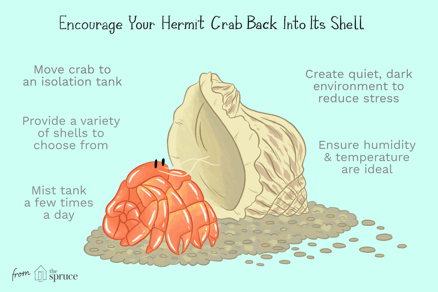 Illustration of ways to encourage your hermit crab back into its shell