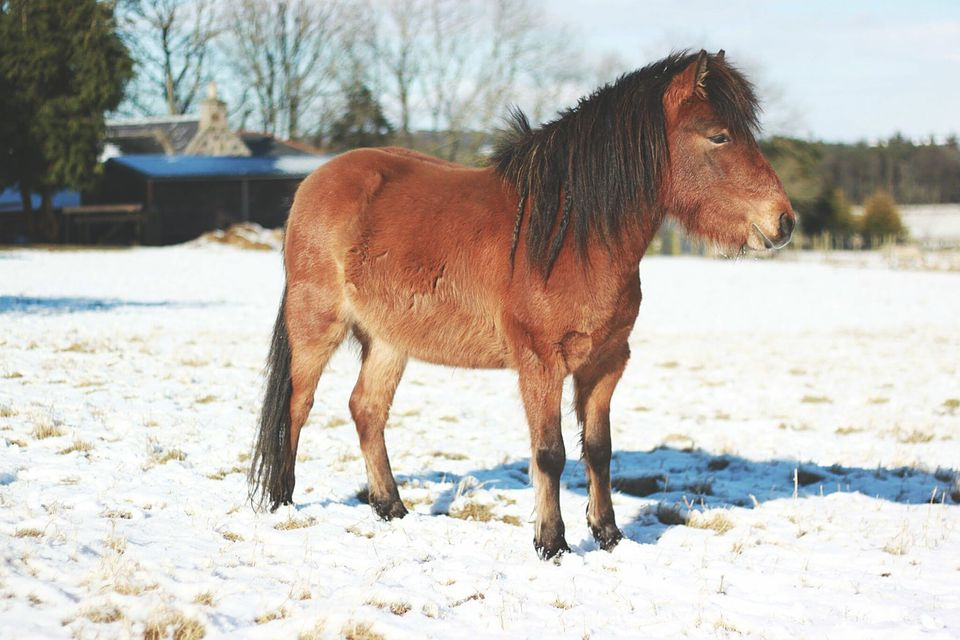 Horse on snow covered field on a sunny day