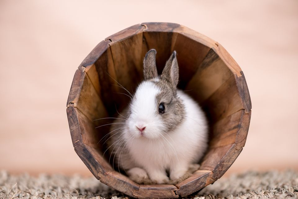 Bunny in a wooden flower pot