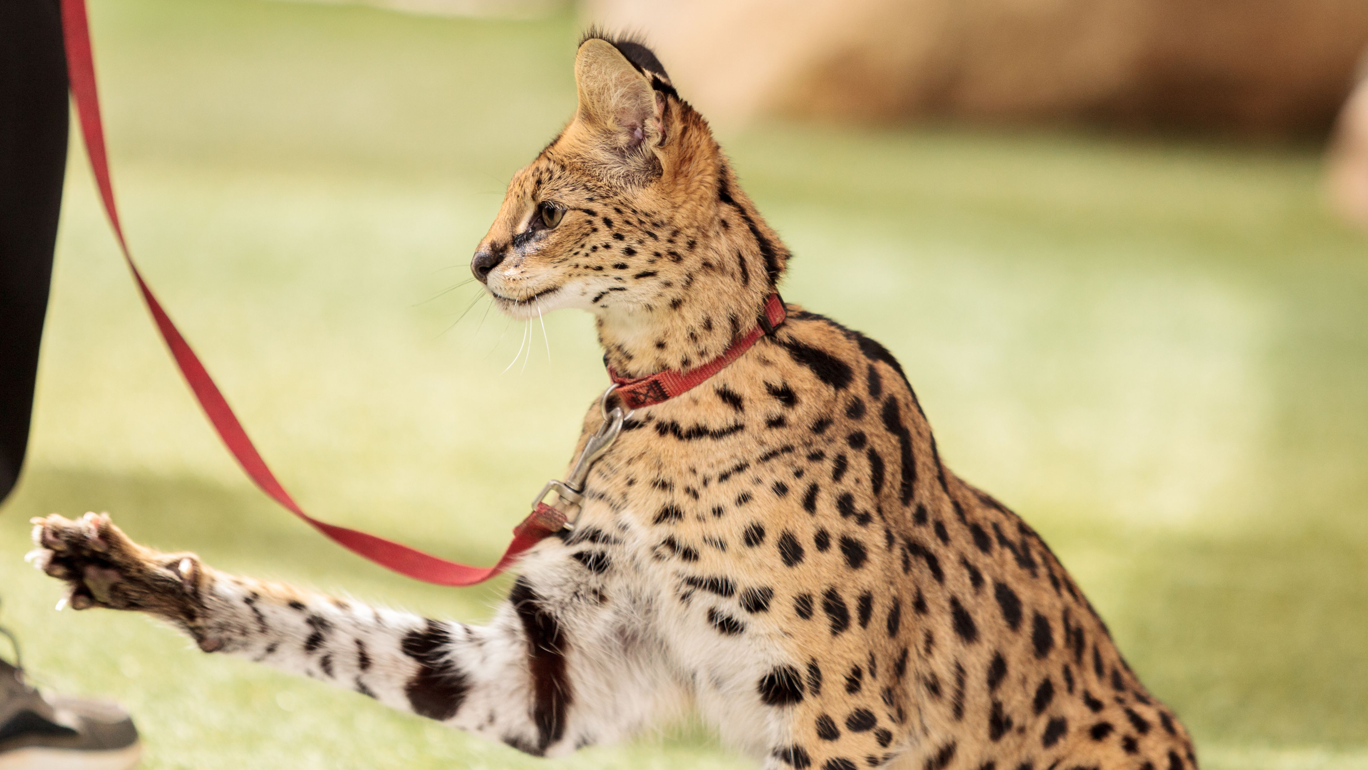 Laws On Exotic Pets For Each U S State