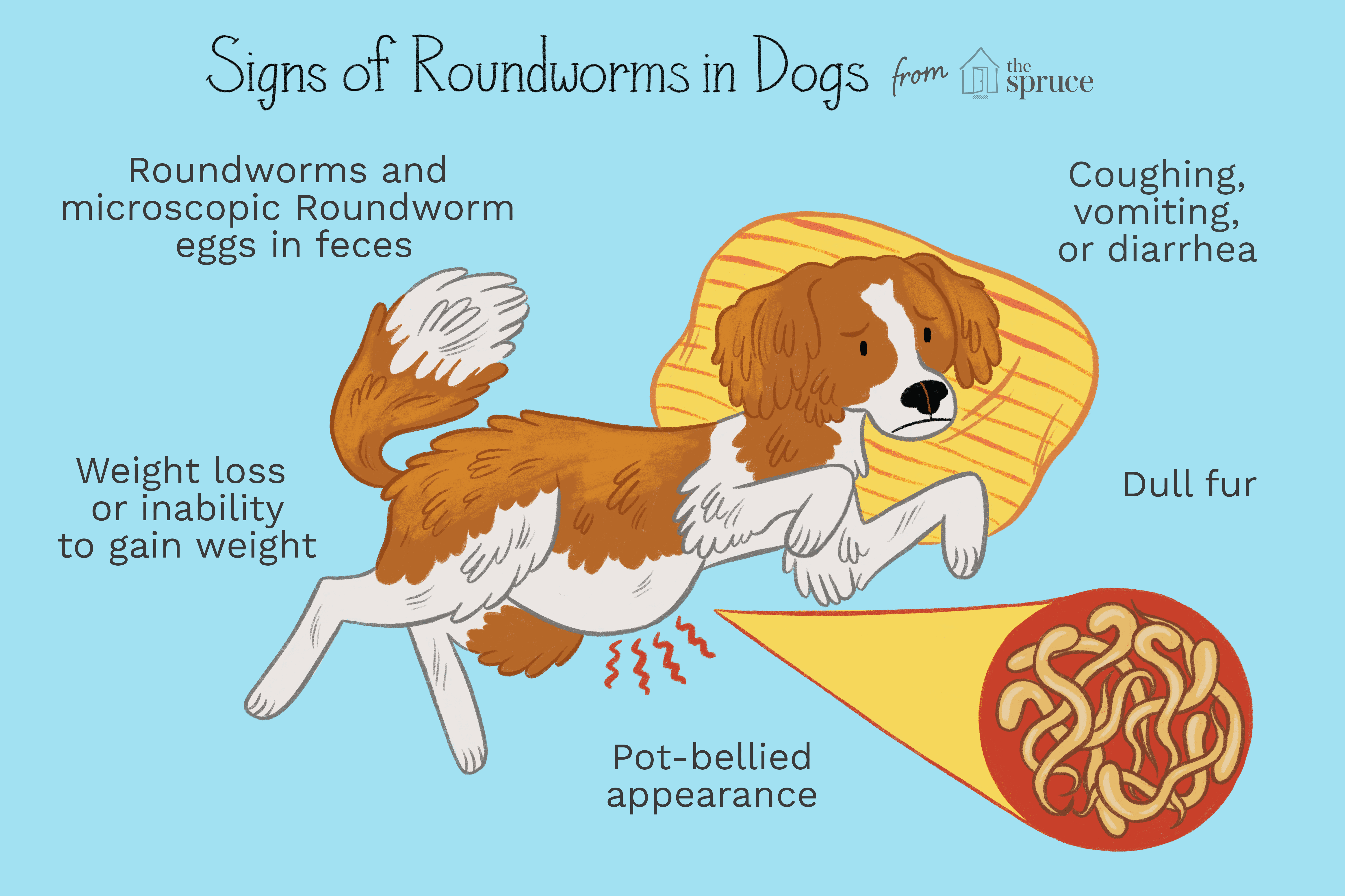 signs of roundworms in dogs illustration