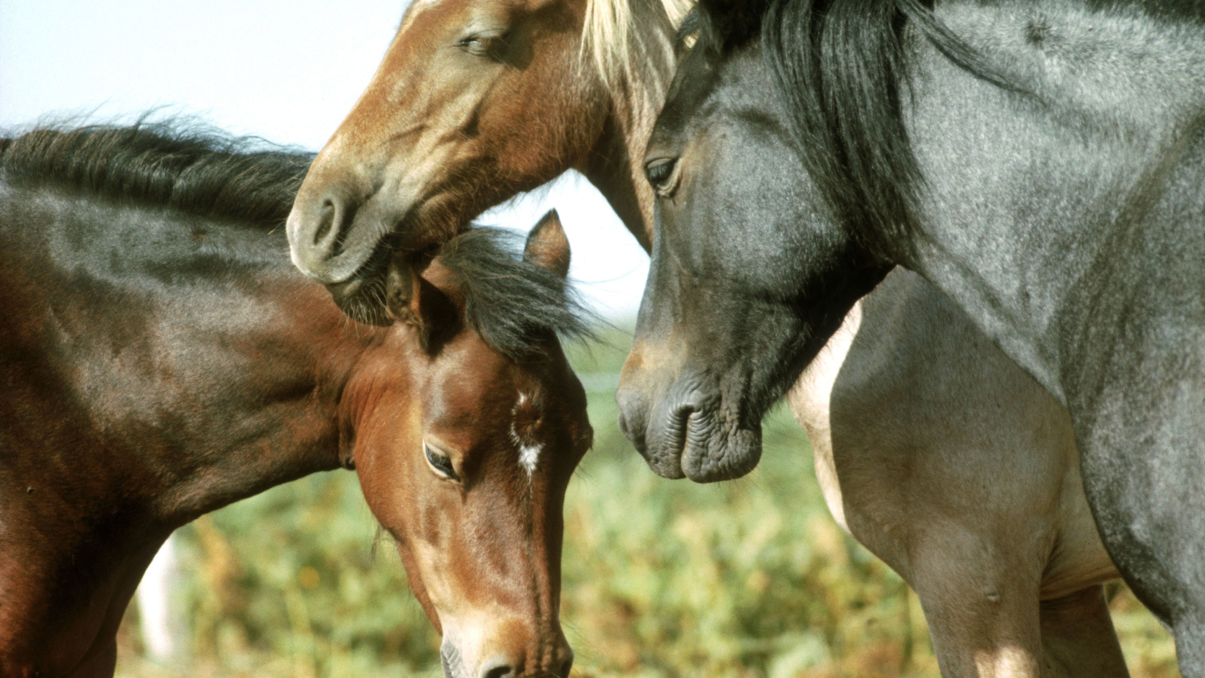 15 Interesting Horse Facts
