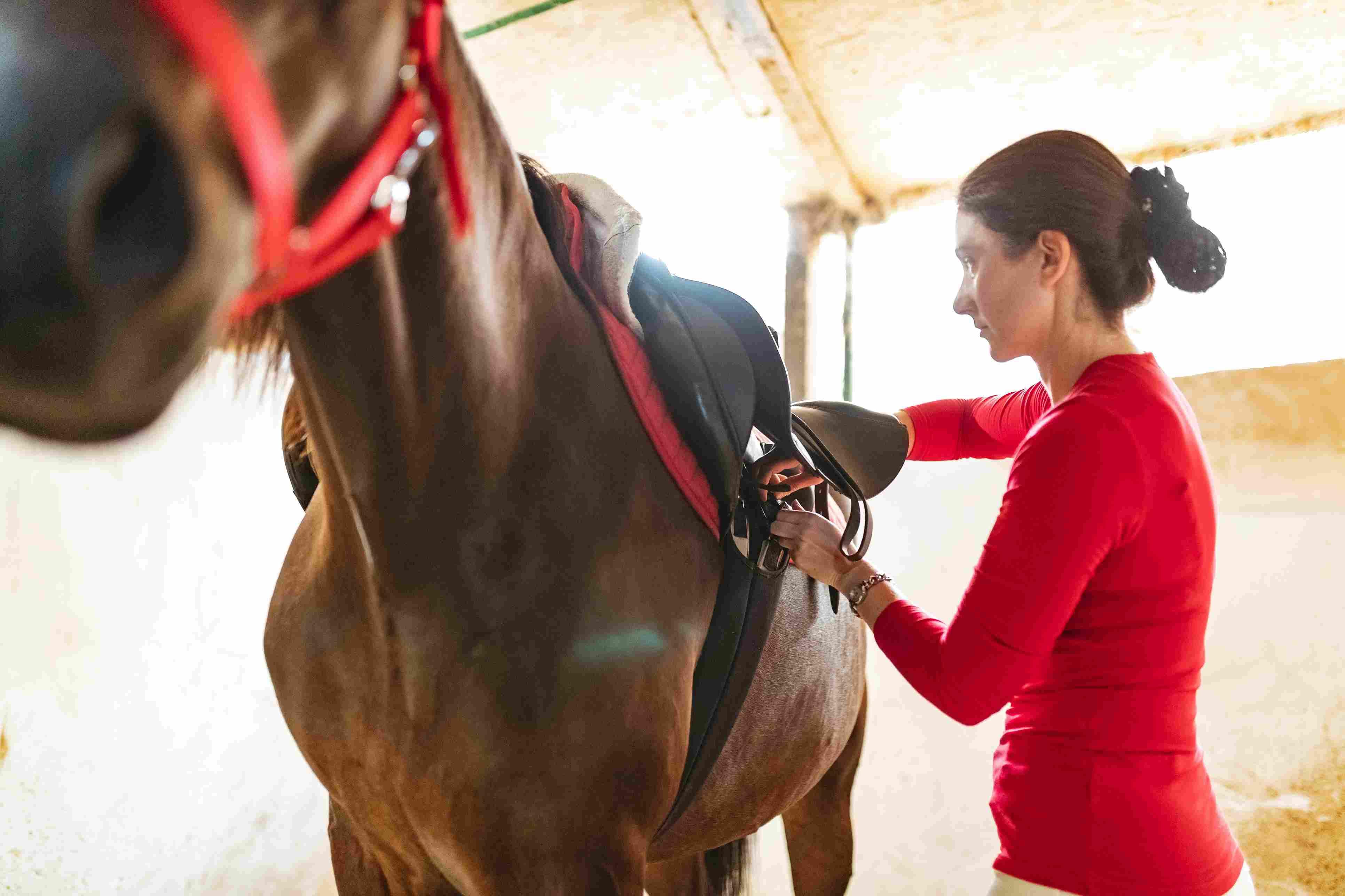 Adjusting saddle straps