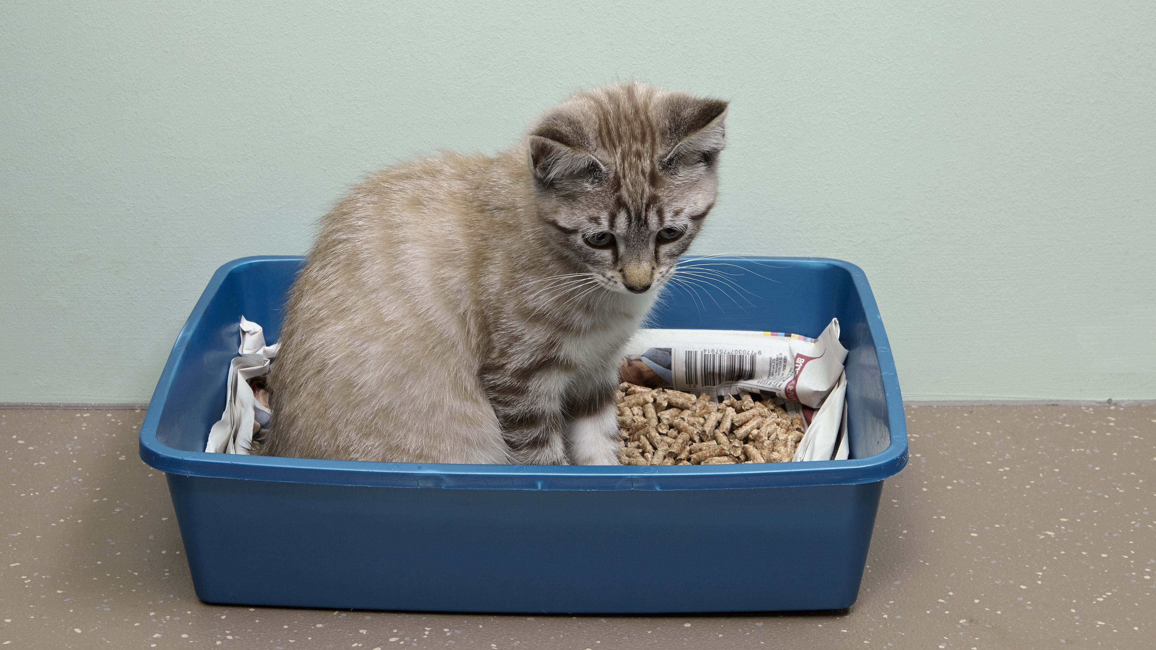 Training Kittens To Use The Litter Box