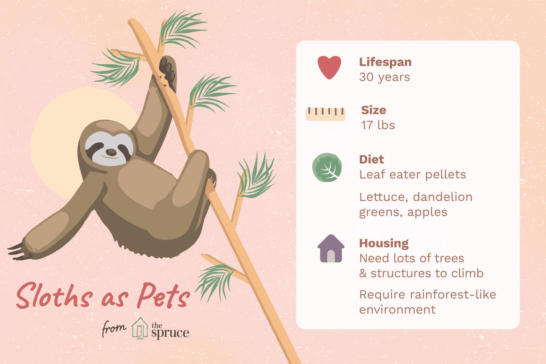 Ilustración de la hoja de cuidados de los perezosos como mascotas