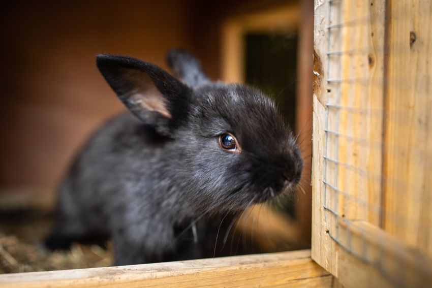 Cute baby rabbits in a farm