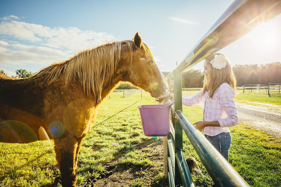 Girl standing watch horse eat from bucket on opposite side of fence.