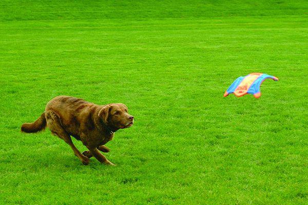 chuk-it-flying-squirrel