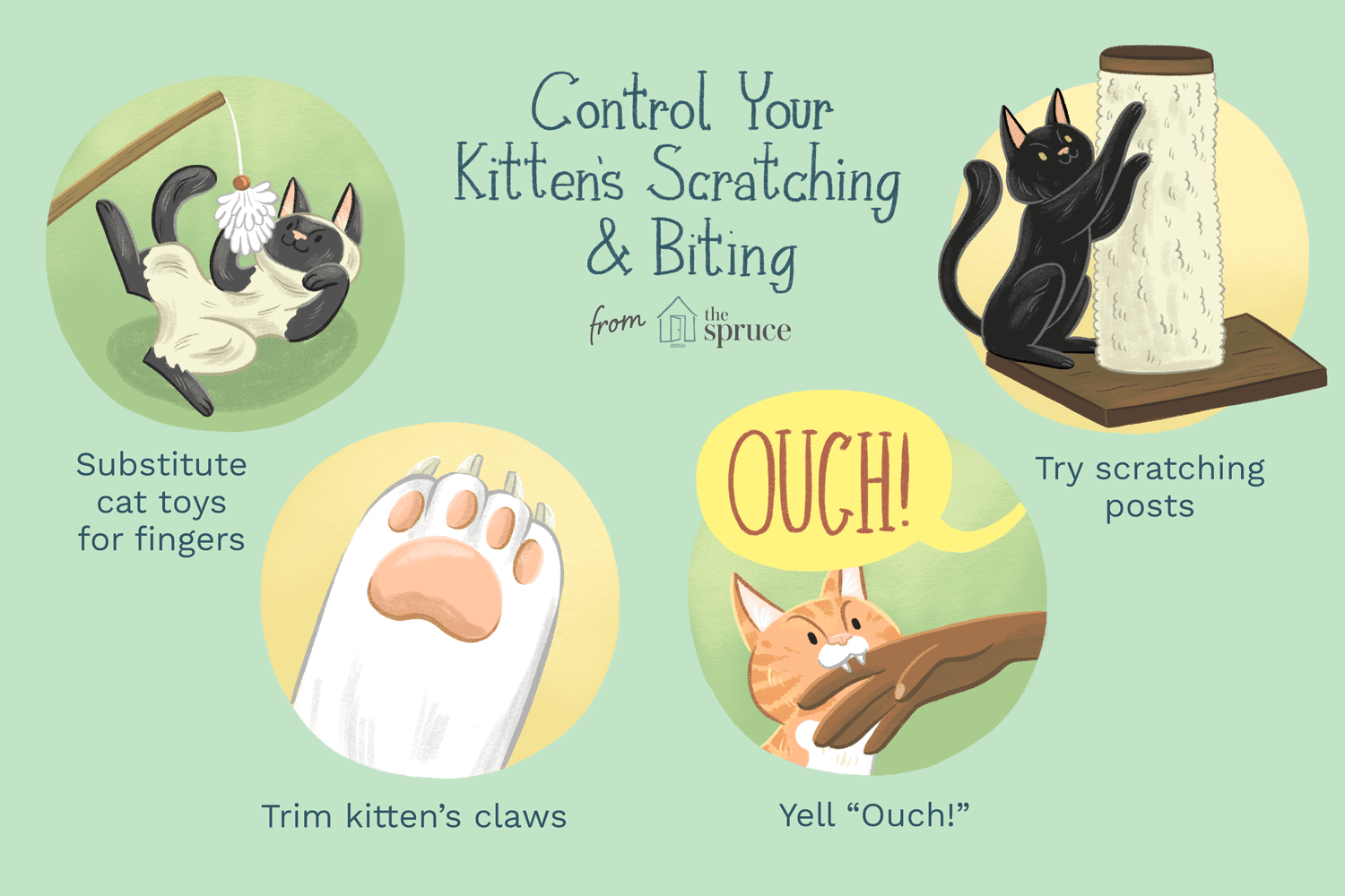 illustration of how to stop kitten scratching and biting