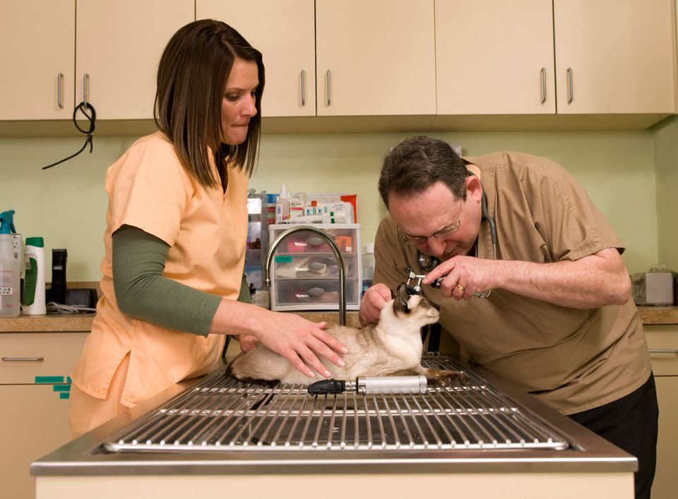 Photo of veterinarian examining cat
