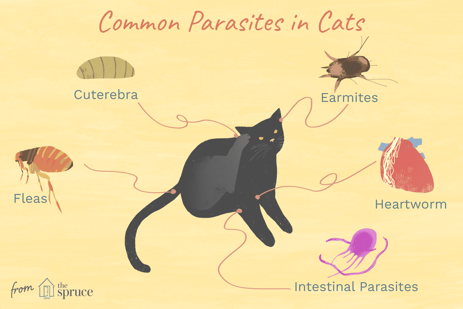 Worms Mites Ticks And Other Bugs That