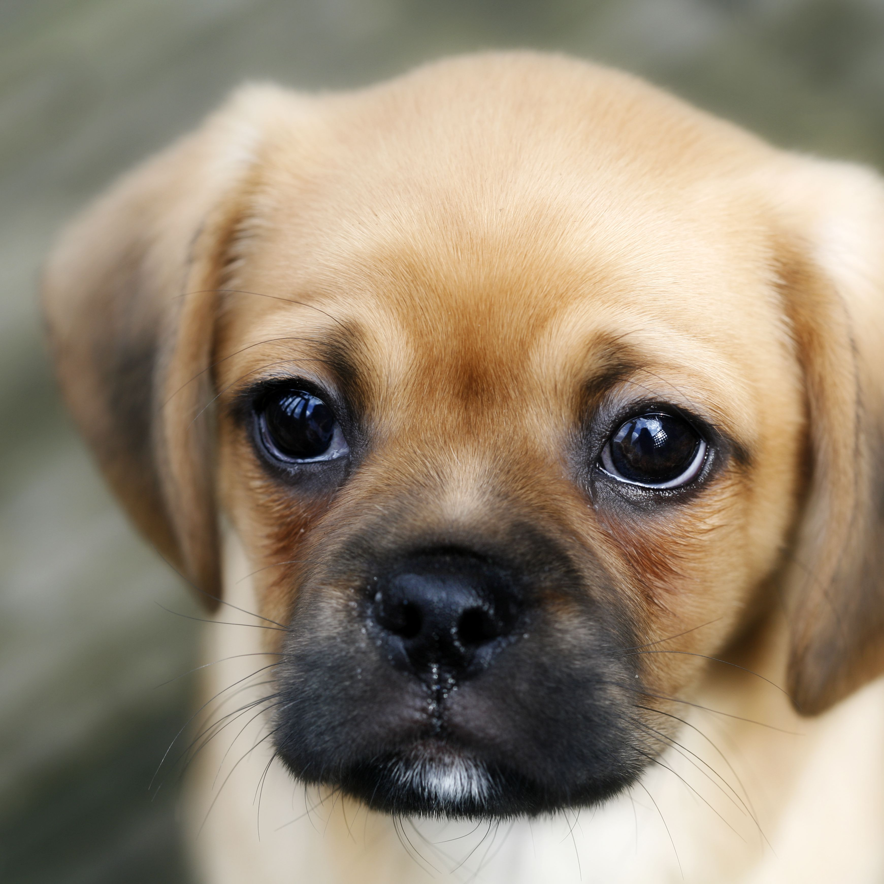 7 Common Puppy Diseases You Should Know