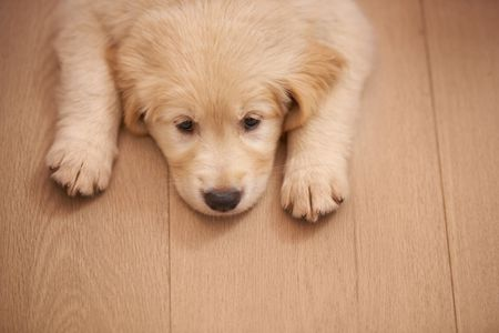 What To Know About Parvovirus Parvo In Dogs