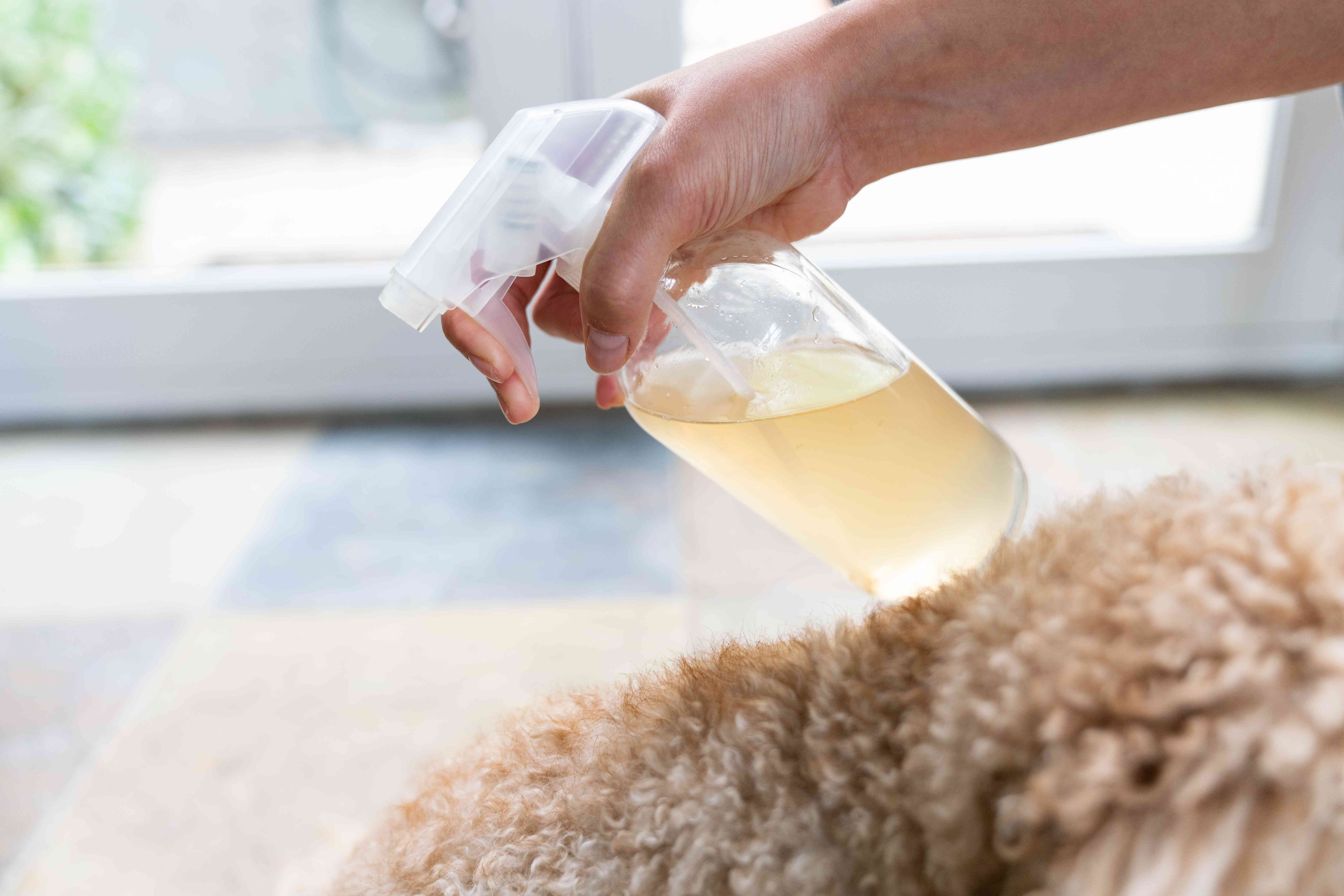 spraying apple cider vinegar solution onto an itchy dog
